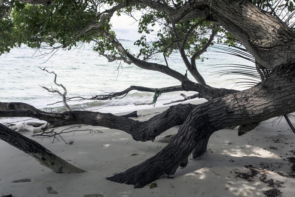 Downed Tree, Matolen, Arno Atoll