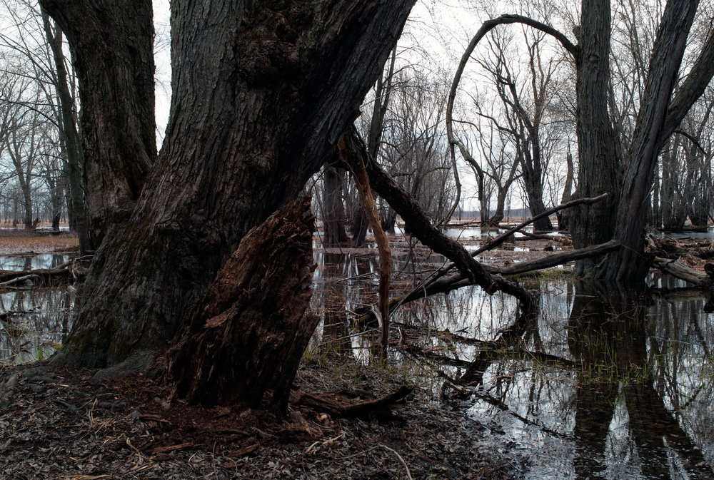 Spring Flooding #1 (2010)