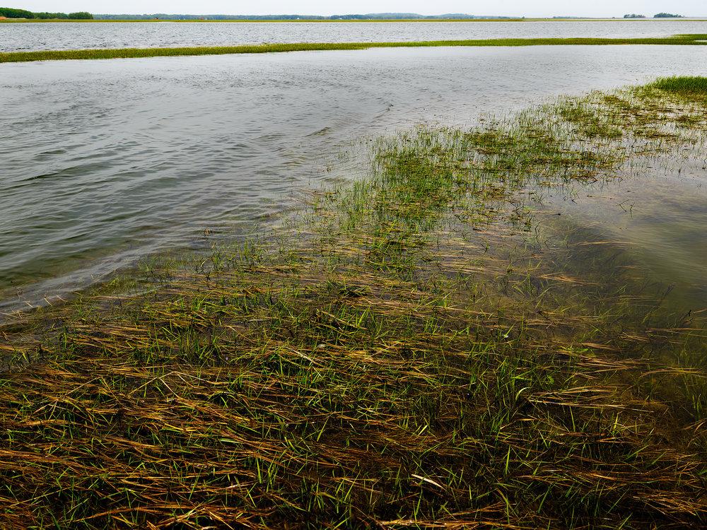 Tidal Flat at Low Tide, Eagle Hill River (2018)