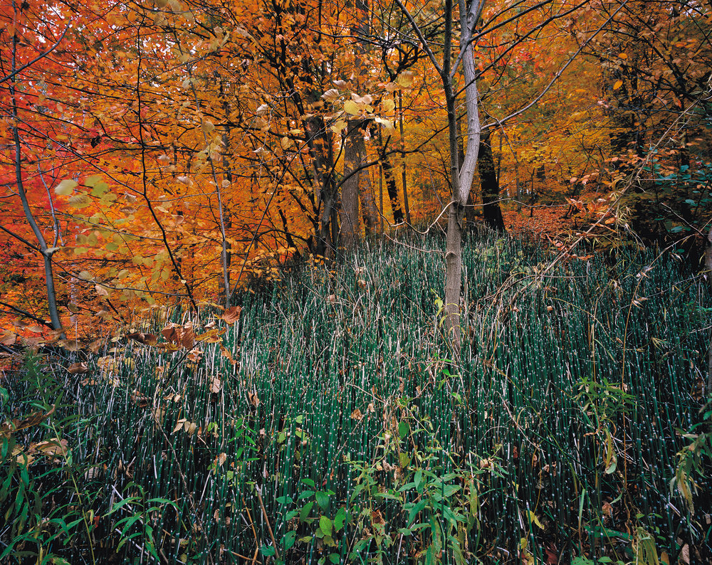 Philip Jessup,  Snake Grass, West Don River, Toronto  (2003)