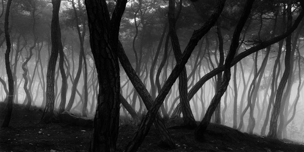 Bae Bien-U, Sacred Wood, 1985 (printed 2009)