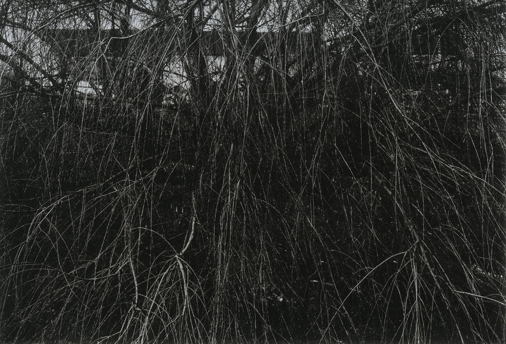 © Paul Strand, Looking Toward Alisans, Willow, Winter, 1964, The Aperture Foundation