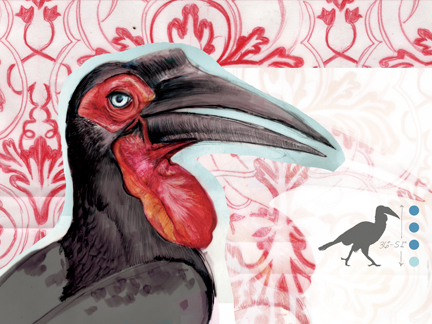 """SOUTHERN GROUND HORNBILL"""