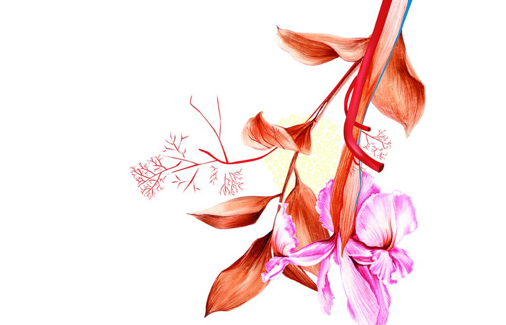 fleur_de_lis4.jpg