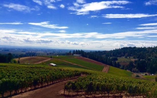 backroads-wine-tours.jpg