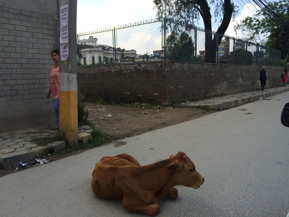 Sometimes it might be a cow in the road that you need to negotiate around. But usually not.