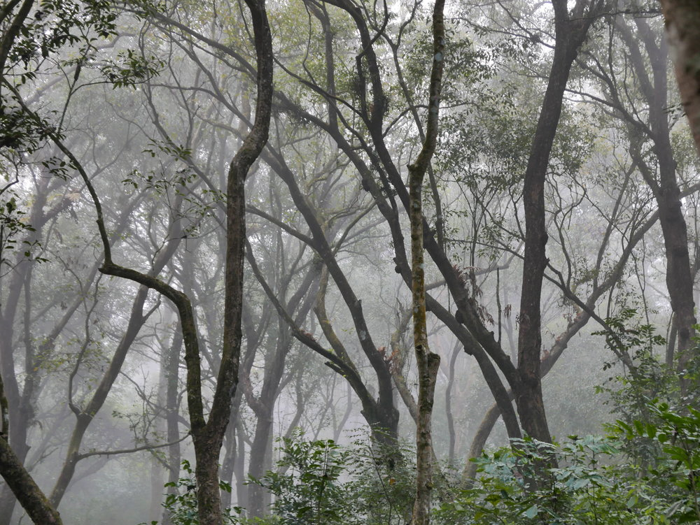 Chitwan National Park buffer zone in the foggy morning. Also could be a metaphor about layers, homophily, and social context, but I'll abstain from that one