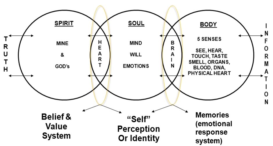 Seven emotions in tcm how to handle them lily choi natural healing note that emotions are known to be associated with pain in certain regions of the body even though science cannot explain it ccuart Choice Image