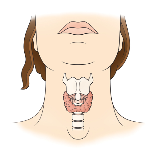 Here is where your thyroid is located within your neck..