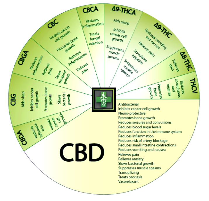 Benefits of CBD on Immune System
