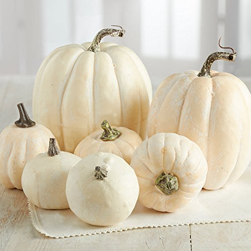 What's Halloween without pumpkins?!  Set of 7 artificial pumpkins - $27.99