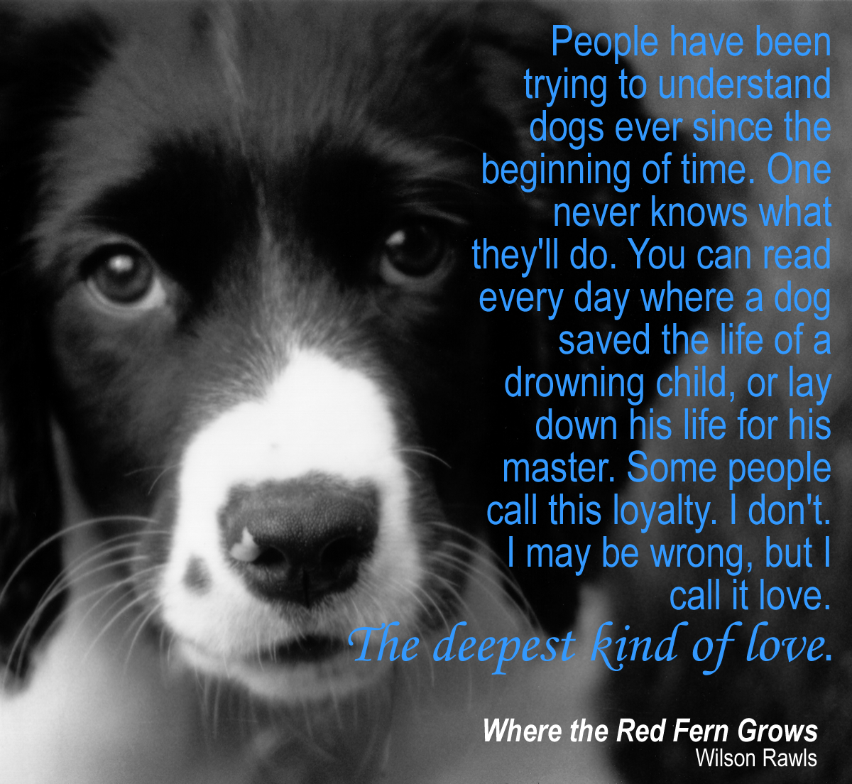 Where the Red Fern Grows Quote