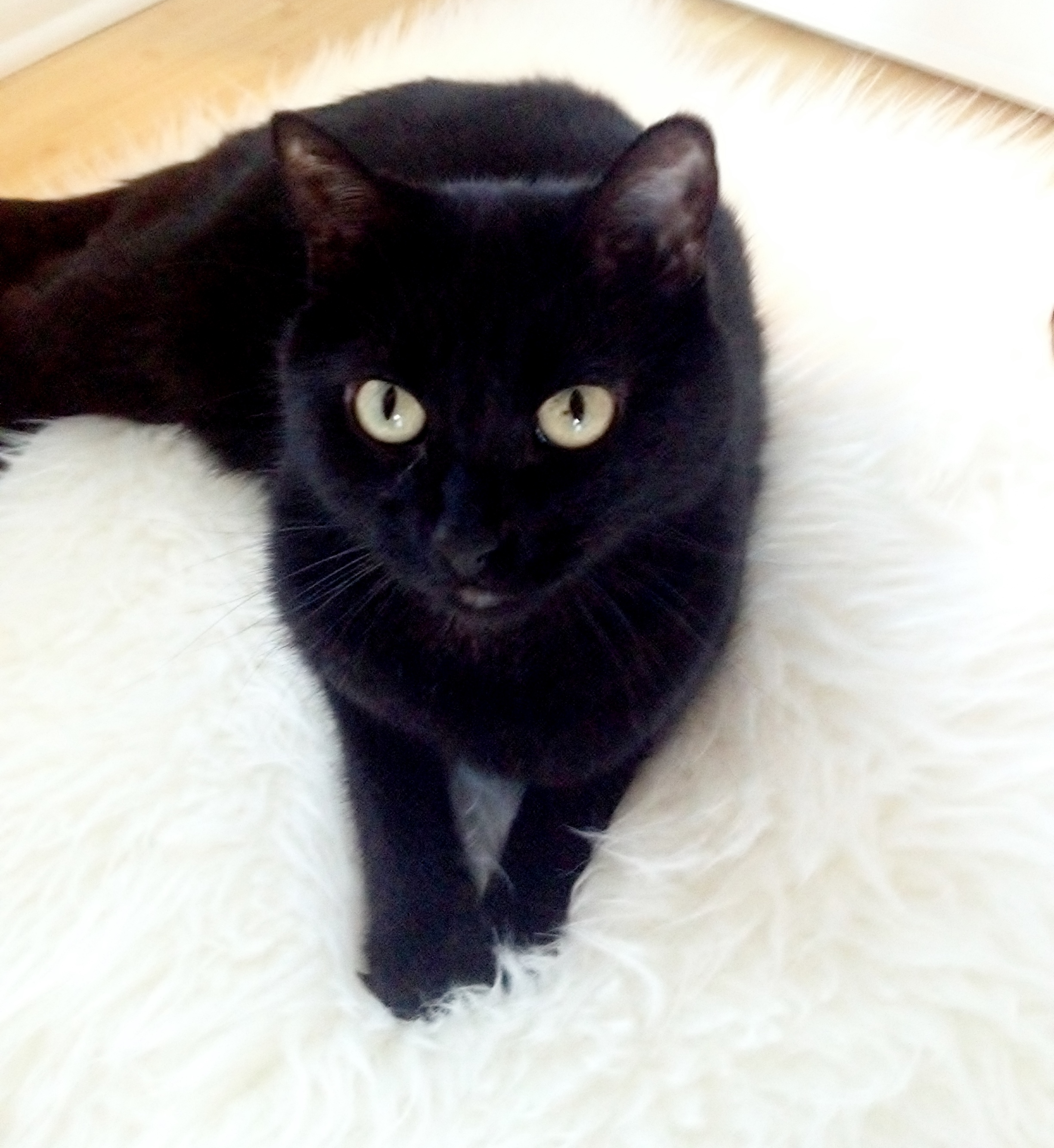 Black Cat on a White Fur Rug Ciaran
