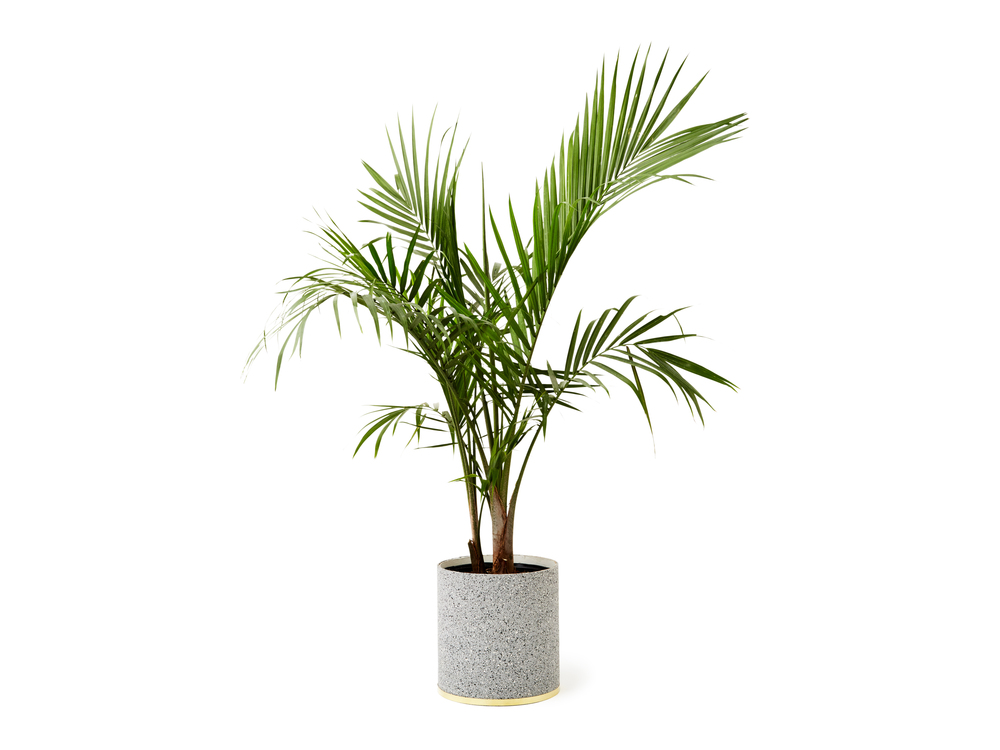 SlashObjects_Planter_Gris.jpg