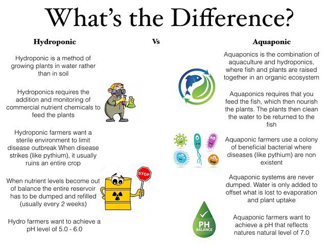 Not to bash on our hydro friends, but just in case you were wondering why we're such big fans of Aquaponics... #aquaponics #sidebyside #hydroponics #sustainable #responsible #future