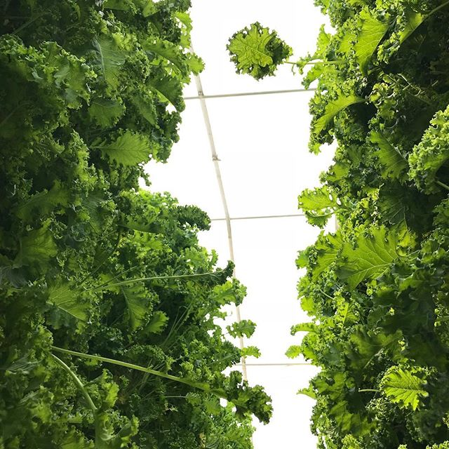 We love what we do and we love that we get to do it for you! It's finally Friday and things are definitely looking up.... Thank you so much to everyone who has supported us these past 6 years!! #LightAhead #bright #vertical #sustainable #agriculture #aquaponics #nutrition #healing #farm #wow