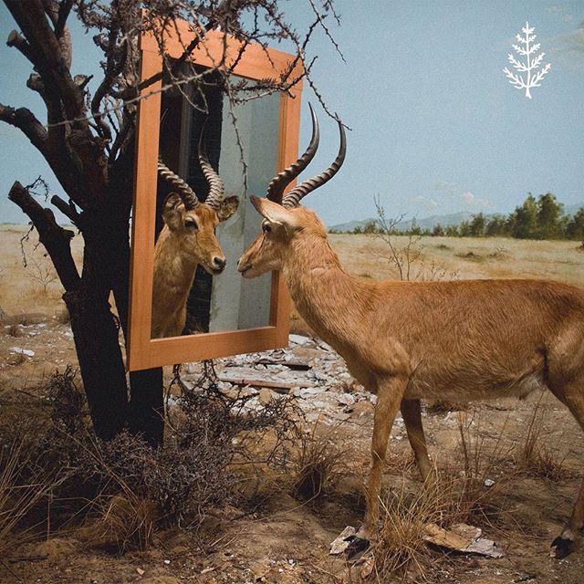 nuevo single: Estado Natural 🌿 — disponible en todas las plataformas, link en la bio. foto por césar lópez.