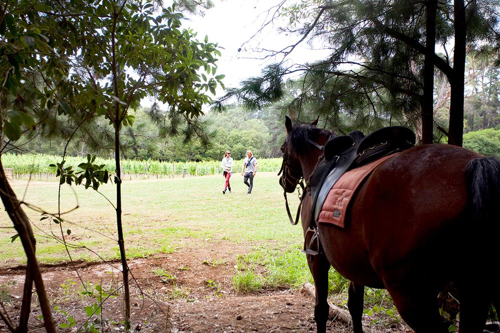 The-Epicurean_Mantons-Creek_Mornington-Peninsula_Vineyard_Weddings_Functions_7_Gallery.jpg