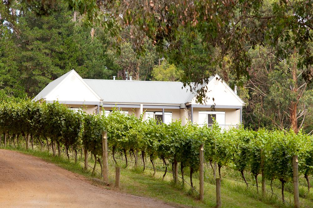 The-Epicurean_Mantons-Creek_Mornington-Peninsula_Vineyard_Weddings_Functions_11_Gallery.jpg