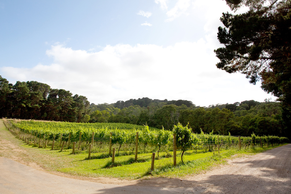 The-Epicurean_Mantons-Creek_Mornington-Peninsula_Vineyard_Weddings_Functions_Dining_Accommodation_6.jpg