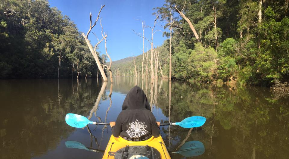 Kayak trees.jpg