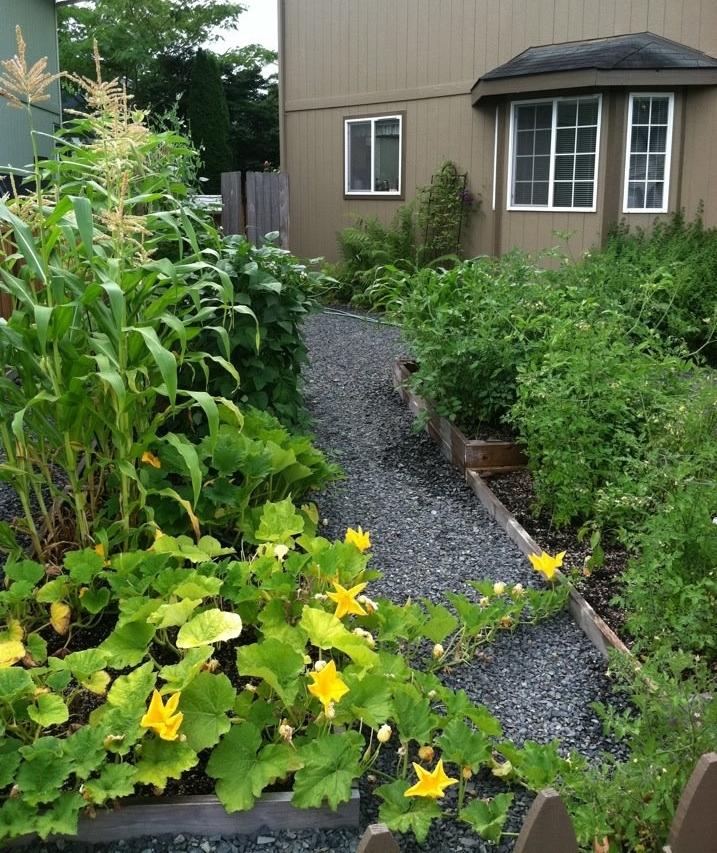 parsnipsandpaisley/givingupgrass/frontyardgarden