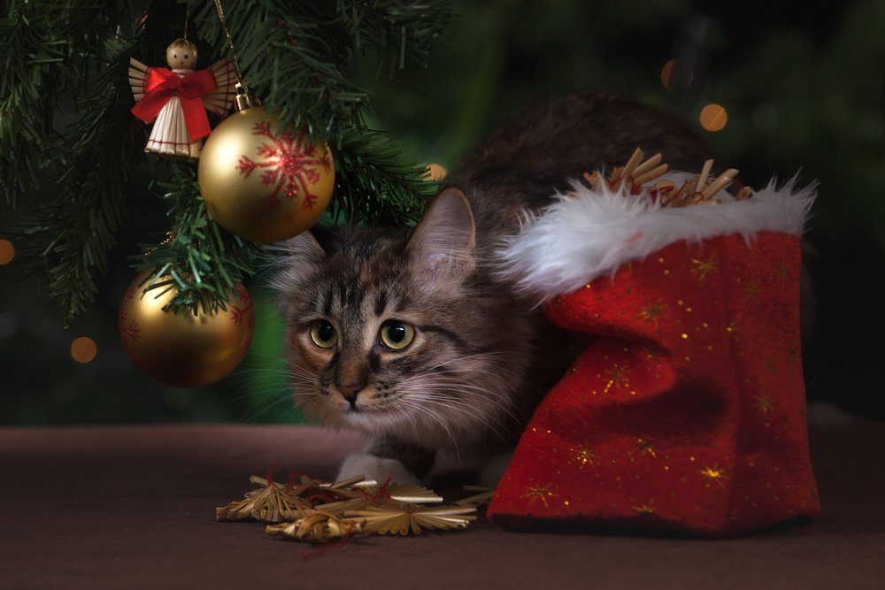 A Minimalist Holiday Gift Giving Guide for Pets