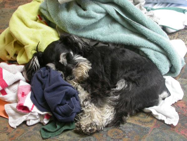 Marley+laundry
