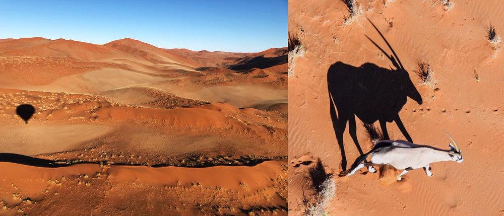 Namibia Antelope.jpg