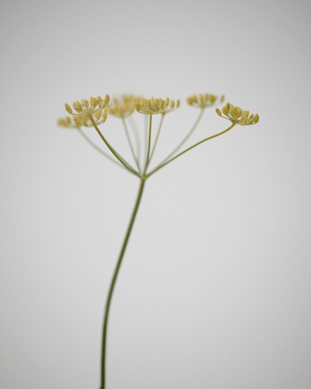 07_Weeds.jpg