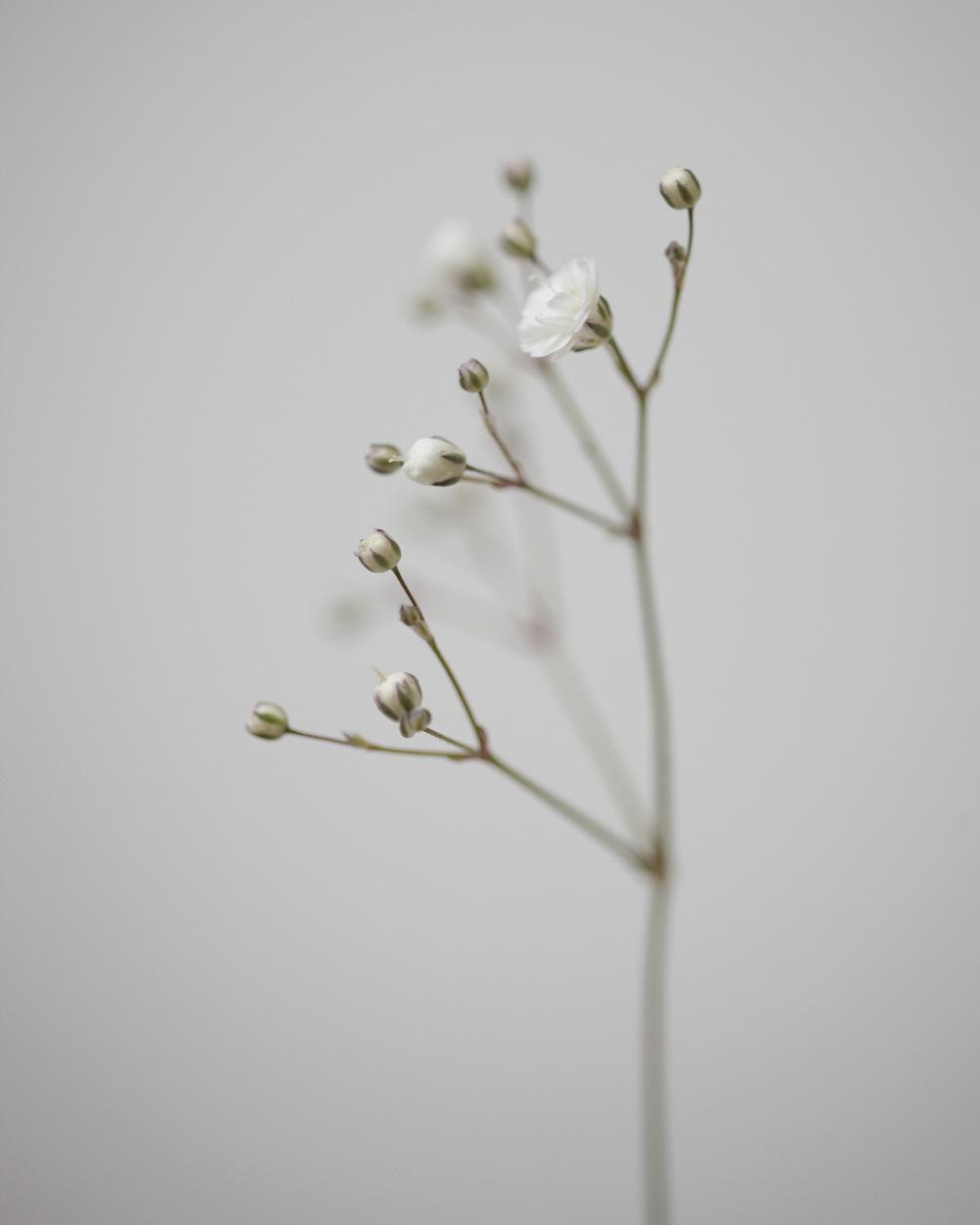 08_Weeds.jpg