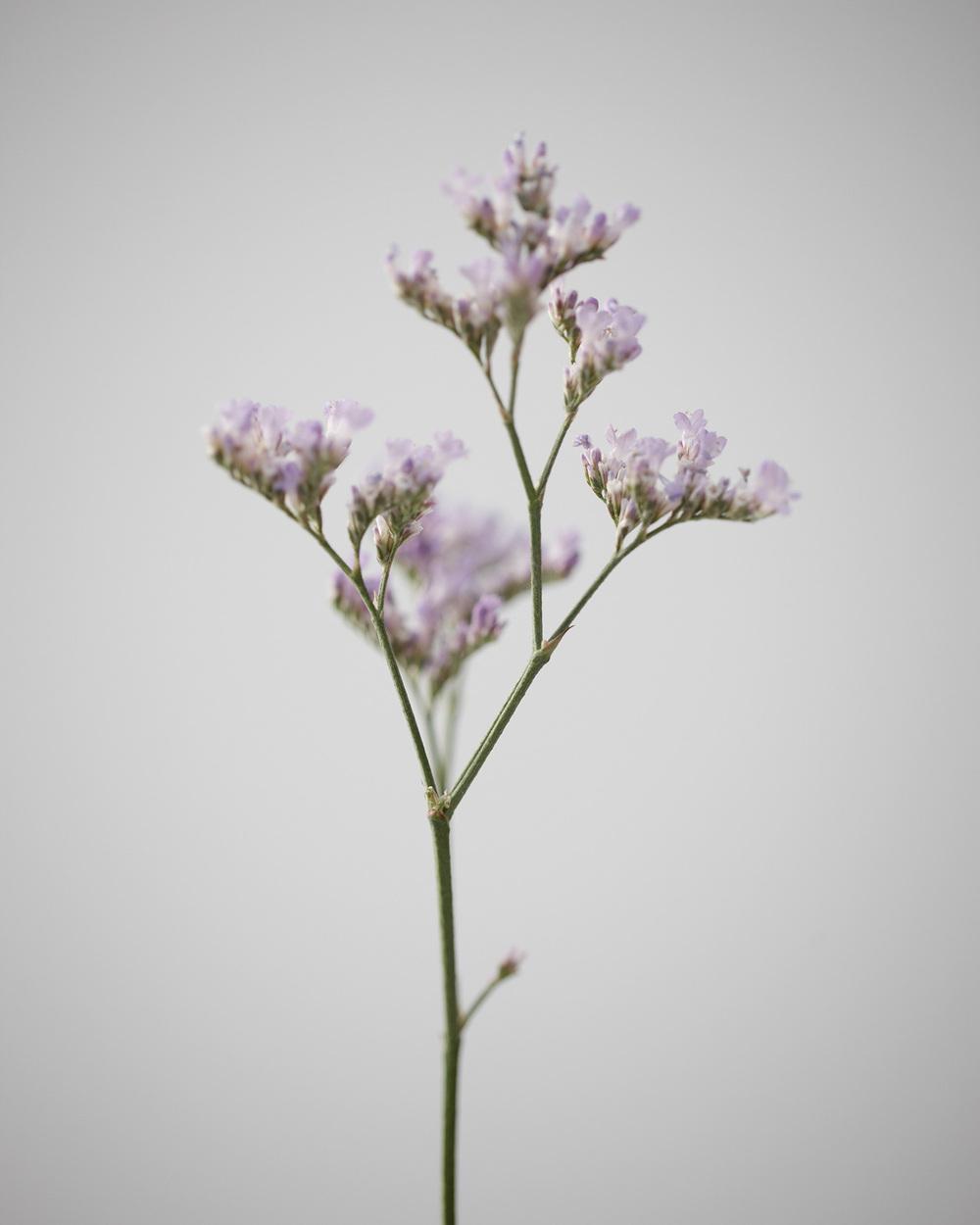 09_Weeds.jpg