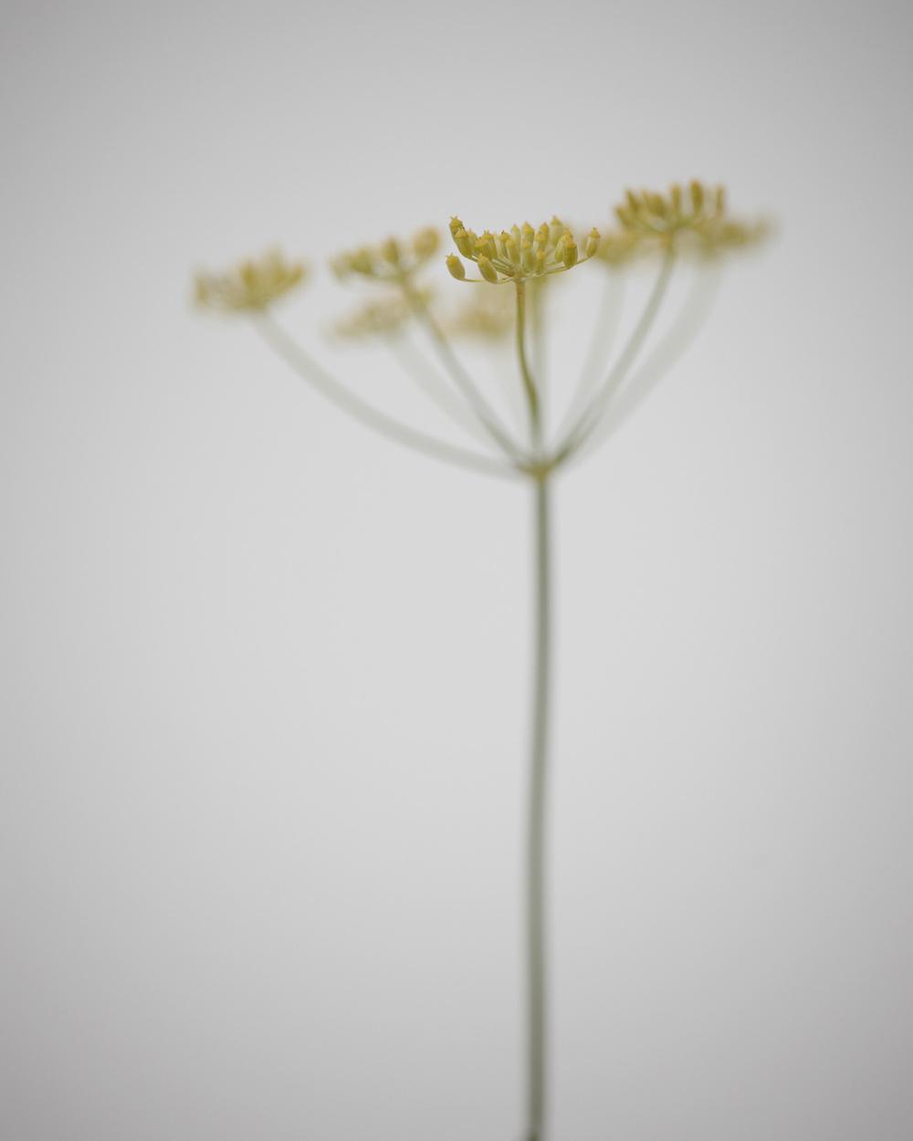 11_Weeds.jpg
