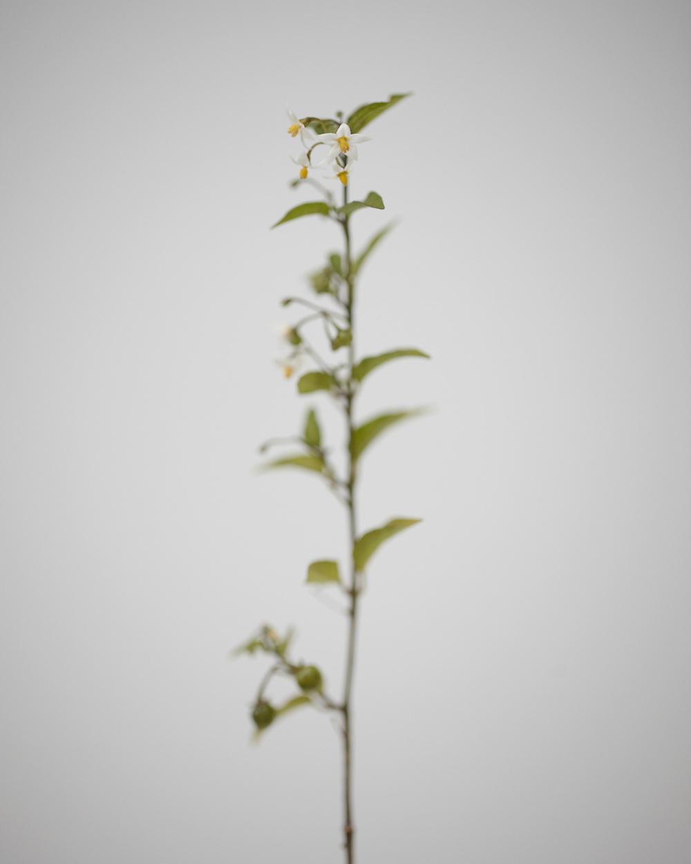 12_Weeds.jpg