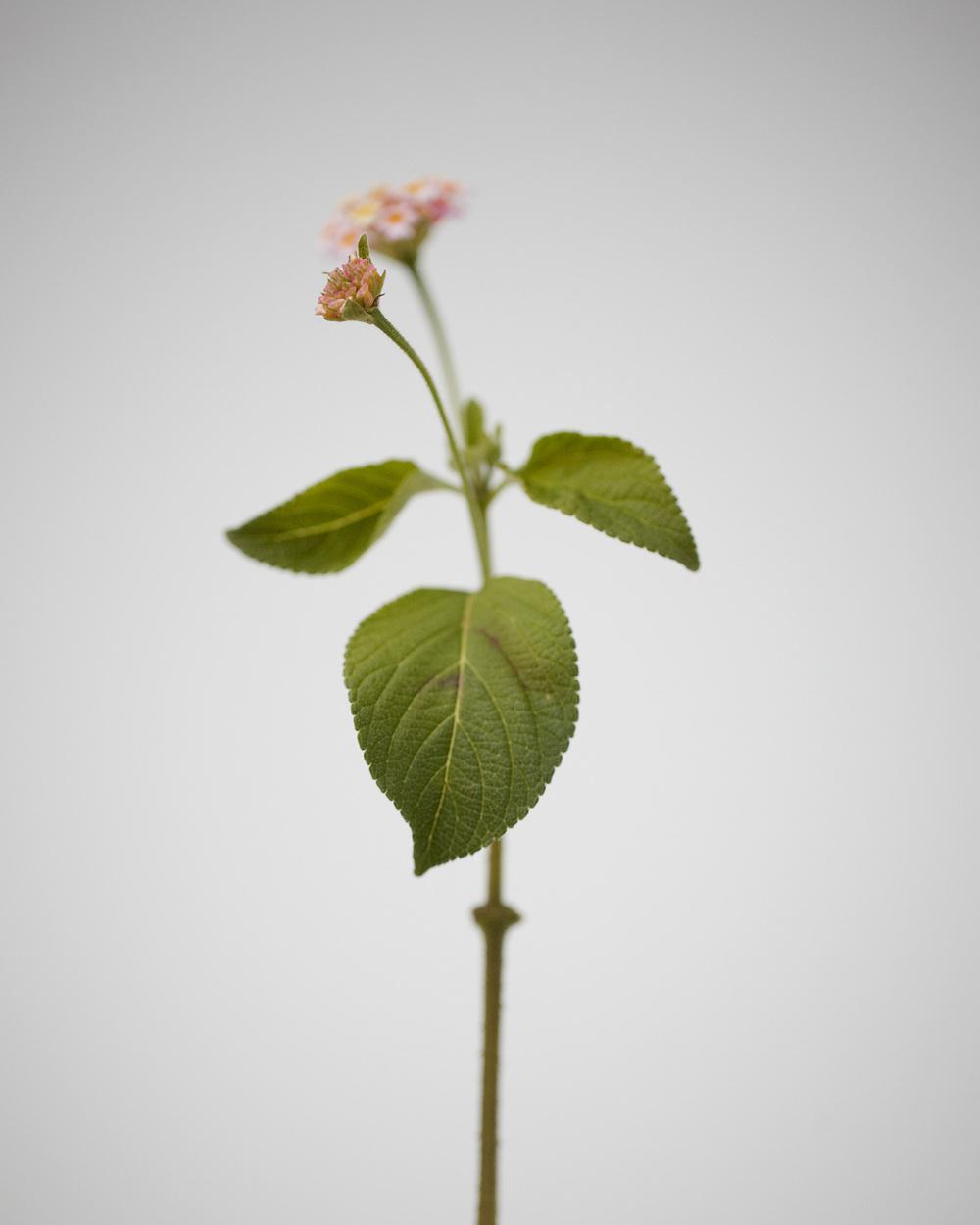 14_Weeds.jpg