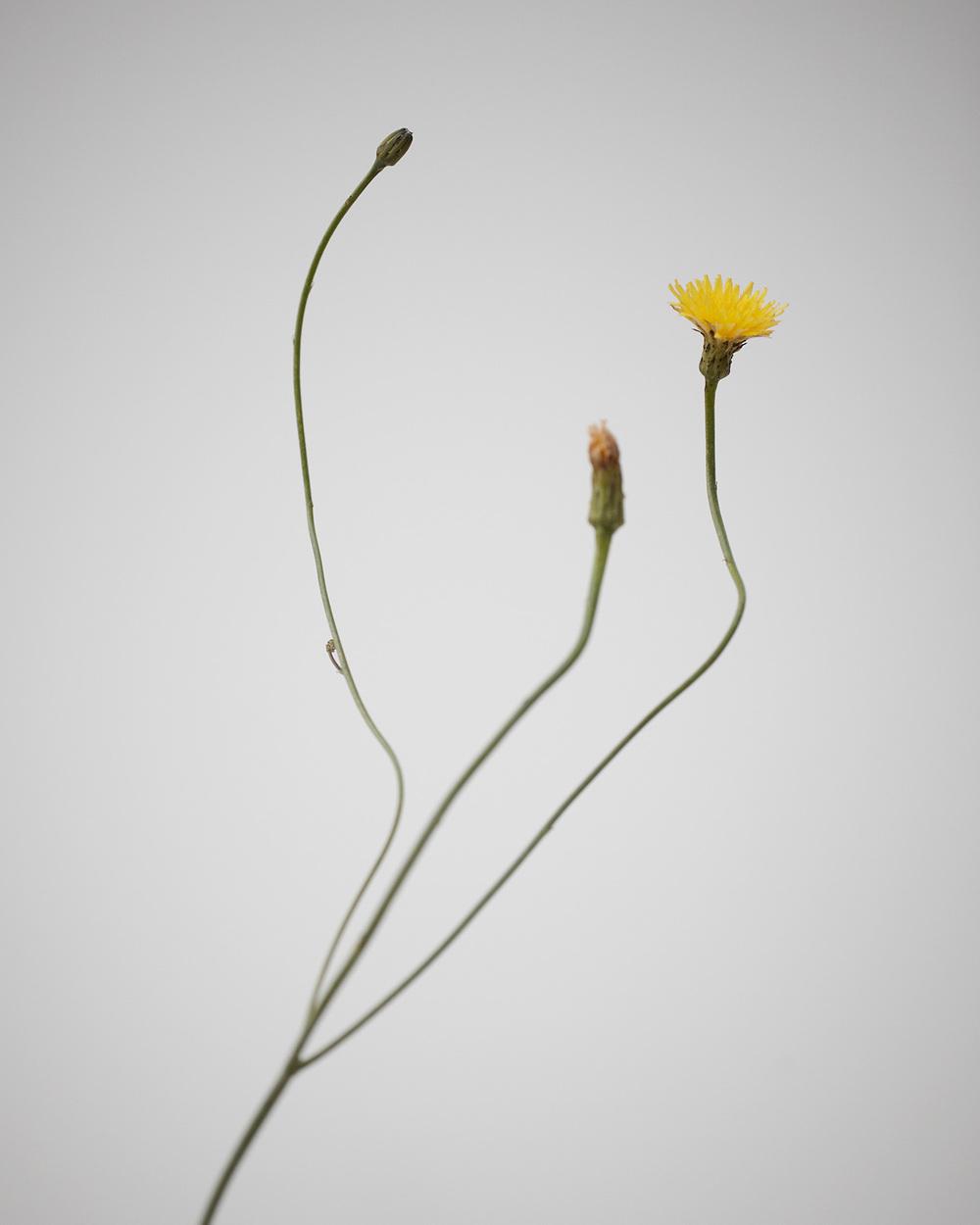 16_Weeds.jpg