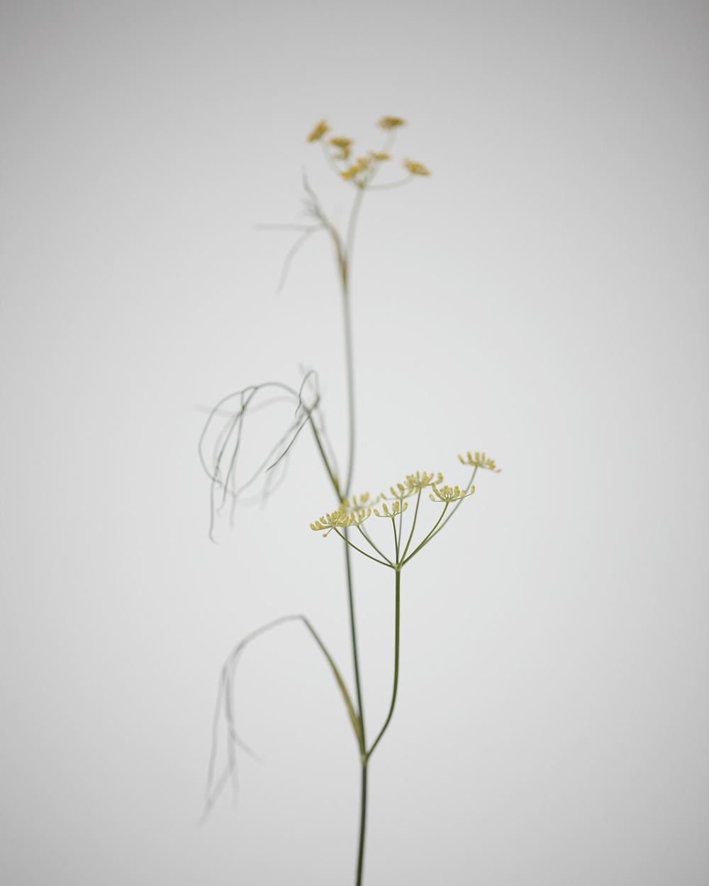 15_Weeds.jpg