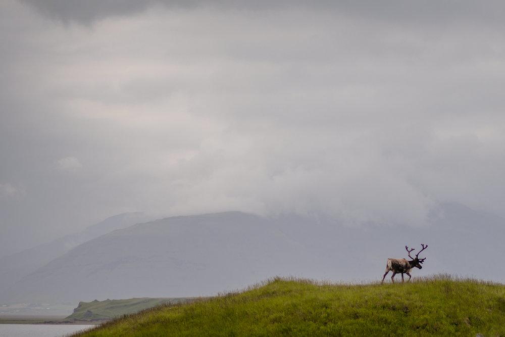 Iceland-WanderingWoo-208.JPG