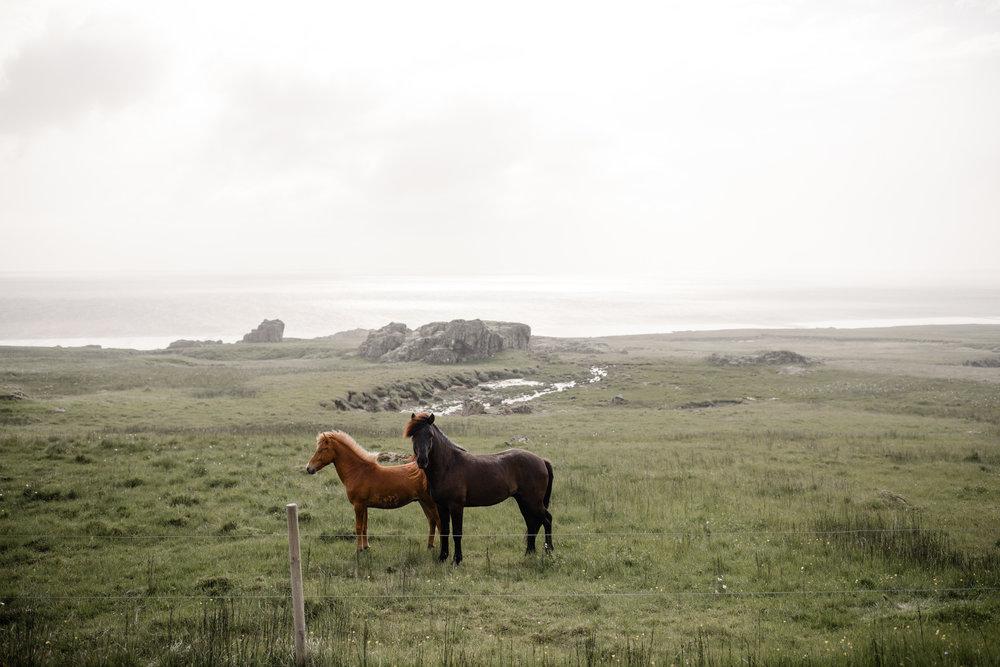 Iceland-WanderingWoo-193.jpg