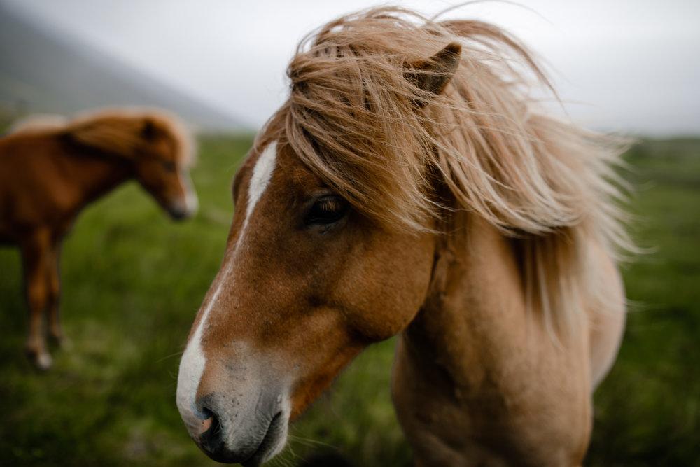Iceland-WanderingWoo-205.jpg