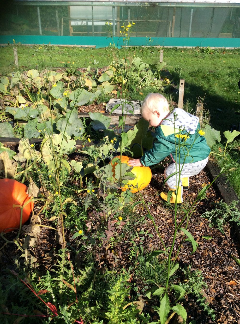 Harvesting at Kindergarten