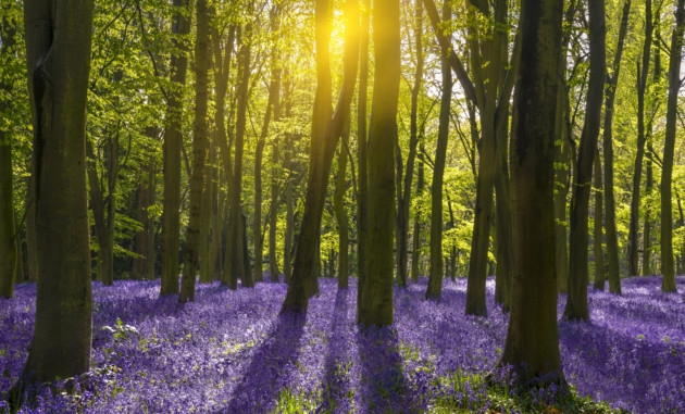 Spring Awakening Day Retreat  Unfold your body with a dynamic morning's yoga sequence to invigorate & a peaceful afternoon of restorative yoga to reset your body & mind for Spring  Date: 6 April, 2019 Location: Turville Northend Nearest station: Henley on Thames Time: 11.00-18.00 Price: £70pp includes lunch, cake & refreshments
