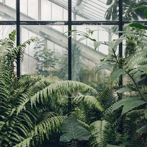 A greenhouse is a little hot box to accelerate growth... #wellbeingbizmag is somewhat similar. Check it out y'all 🍃 Link in our profile ✌️ 📸@stillbeautyau . . . #smallbusiness #wellbeing #wellness #bossbabes #businesschicks #bossmum #creativebusiness #lowtox #wellbeing #nature #green #wellness #naturopath #nutritionist #dietician #organic #natural #nourishing #healthy #organic #ethical