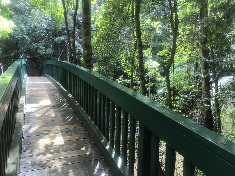 Arch shaped bridge -a great viewing point for Serenity Falls (also known as Buderim Falls)