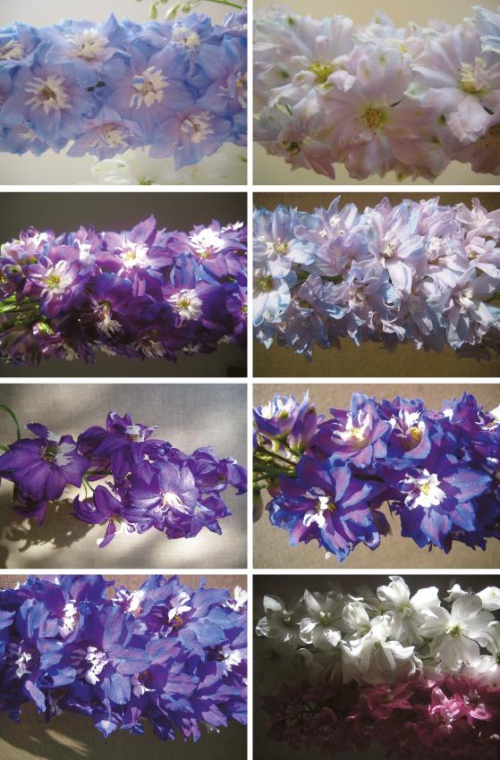 the flowerbeds_steichen5.jpg
