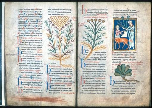 Artemis übergibt Cheiron 2 Arten von Artemisien.Bodleian Library, Oxford, MS. Ashmole 1462, Folio 23r, spätes 12. Jahrhundert