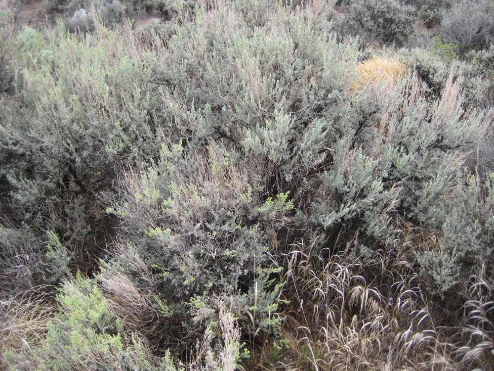 Taos, New Mexico, 2011