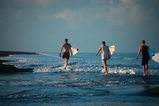 canguu surf.jpg