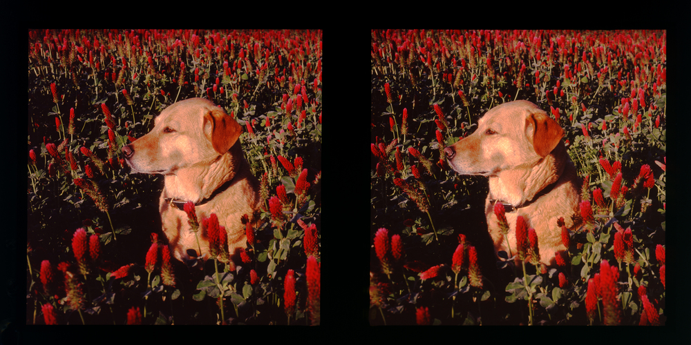portrait-daisy.jpg