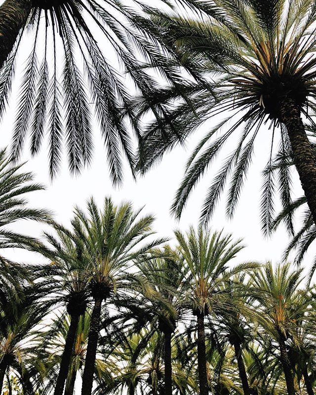 CA 🌴   NH ❄️ #expowest #expowest2018 #catchfirecreative #creative #agency #creativedirector #agencylife #eastcoastcreatives #westcoastisthebestcoast #🌴 #travel #weekendaway #ihavethisthingwithpalmtrees